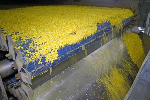 Corn Conveyor Belt